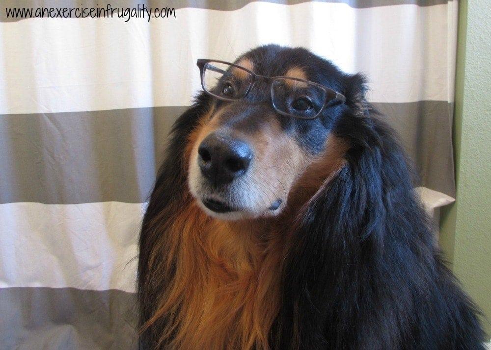 Professor Bear