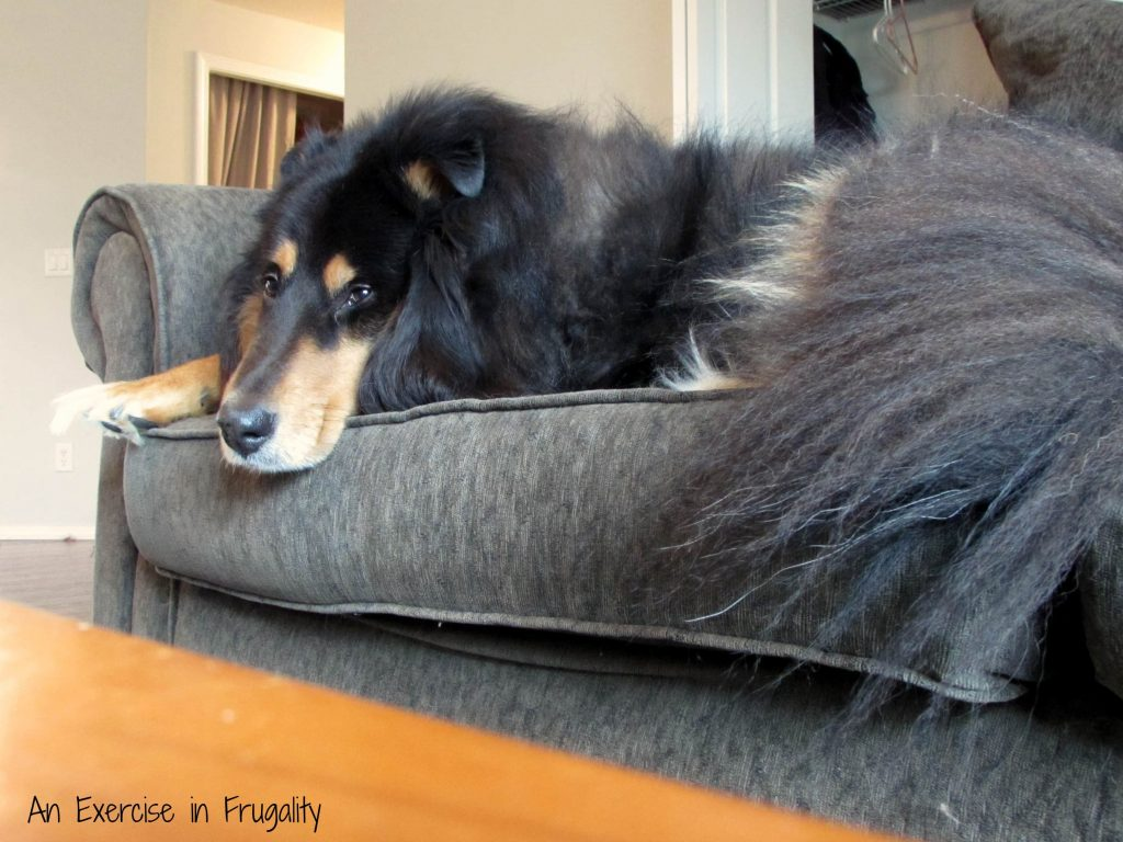 dog-fur-couch