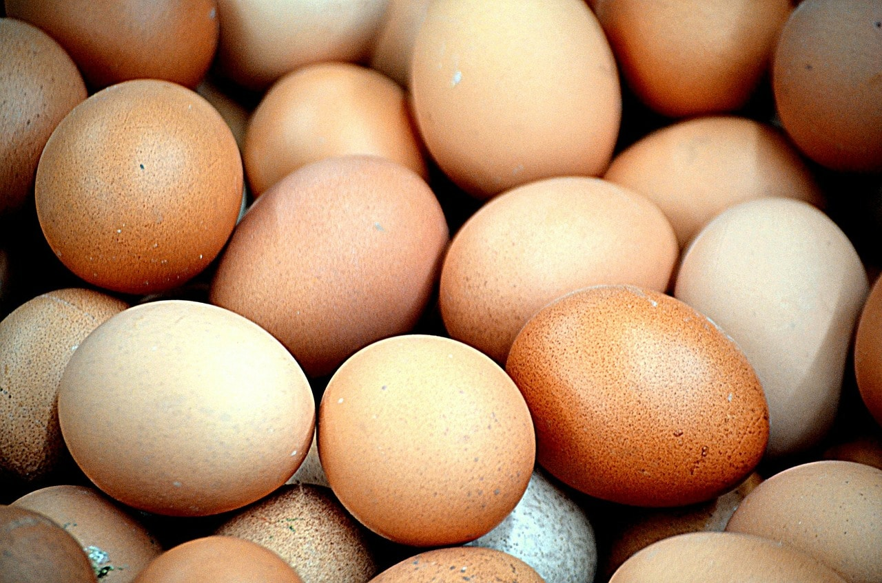how to dehydrate eggs