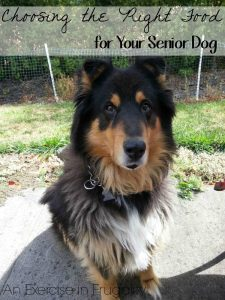 Choosing the Right Food for Your Senior Dog