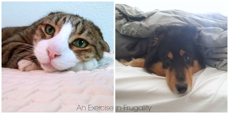 dog and cat sleeping on bed