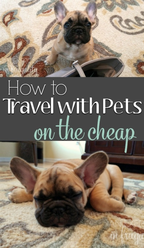 How to Travel With Pets on a Budget- Sure you could leave your fur babies at home with a pet sitter, but you know you'll miss them terribly! Bring your pet along when you travel! It's easy with the right hotel and a few simple tips! #MyESA #ad