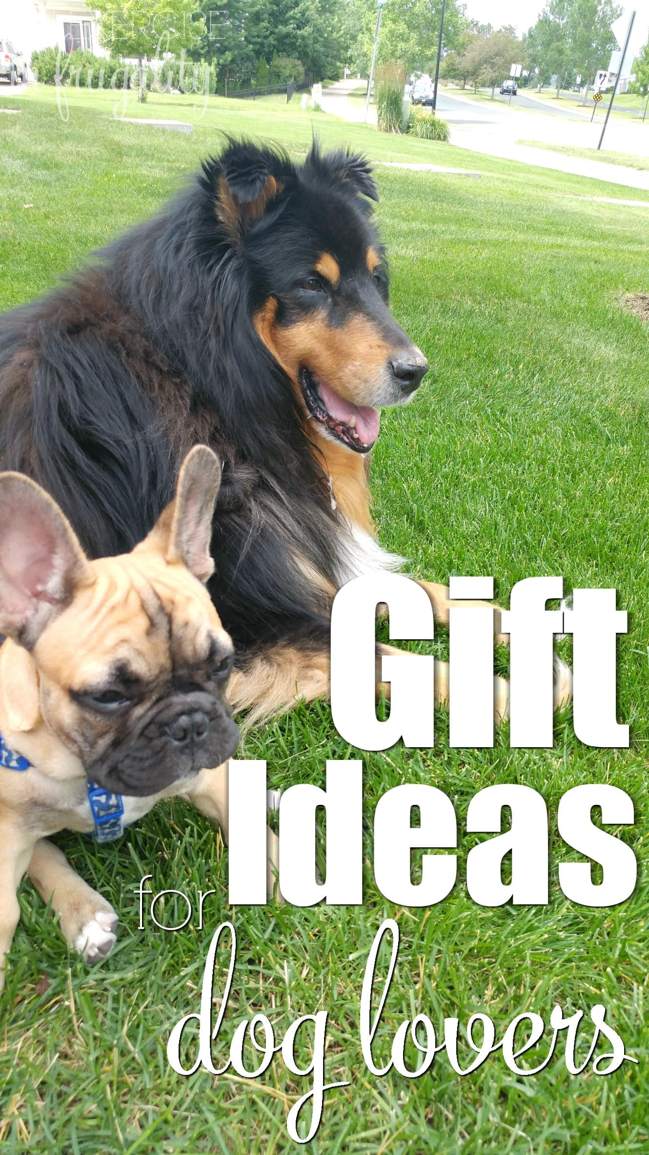 Gift Ideas for Dog Lovers- Every dog mom and dog dad will love these gifts for dog lovers. We've collected some of the greatest holiday gift ideas for people who love their pets! Easy Christmas shopping right here.