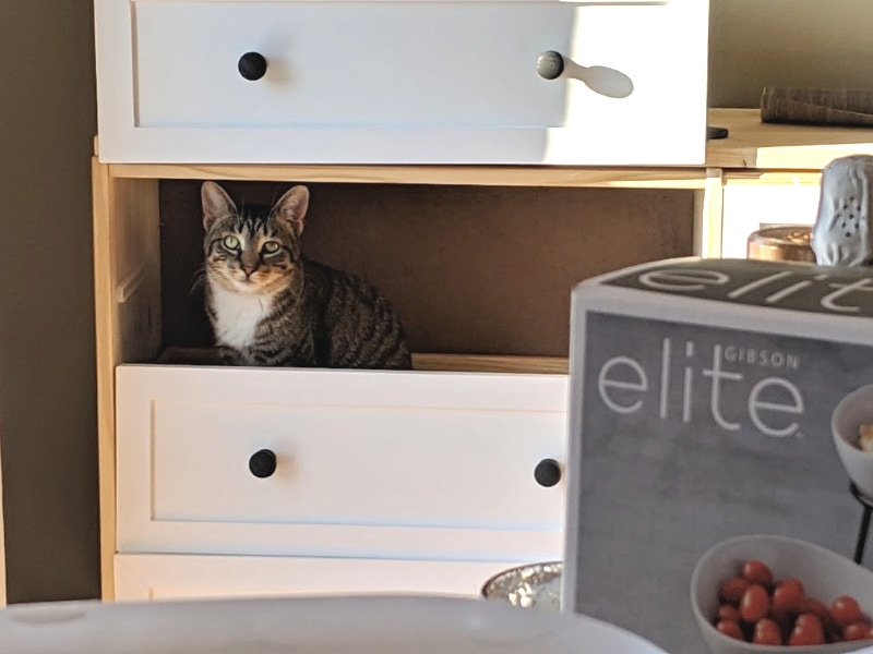 cat hiding in drawers